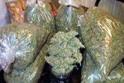 ضبط عاطل وبحوزته ( 15 ) كجم  من نبات البانجو المخدر بلبيس شرقية