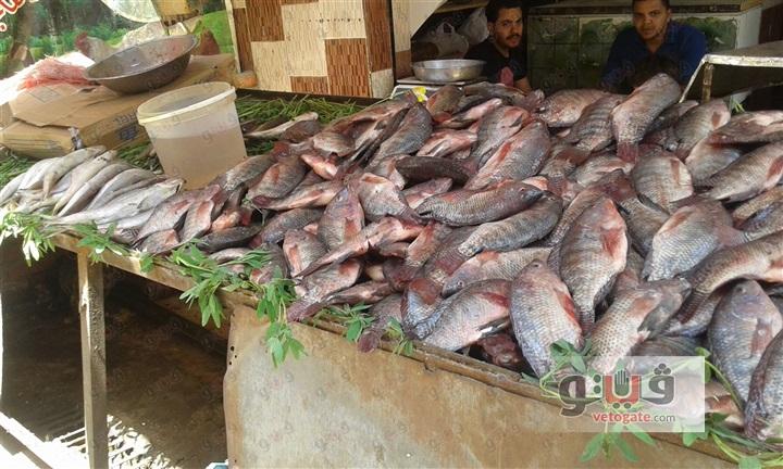 تحذير شديد اللهجة من تناول السمك البلطي المجمد ! والحقيقة وراء تلك الأسماك المنتشرة بالأسواق