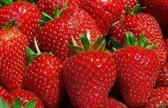 5 و111 مليون دولار إجمالى صادرات الإسماعيليةمن الخضر والفاكهة خلال الشهرين الماضيين.