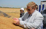 مع بدء موسم الحصاد.. طاهر يؤكد نستهدف توريد اكثر من 90 ألف طن من القمح المحلى بالإسماعيلية .