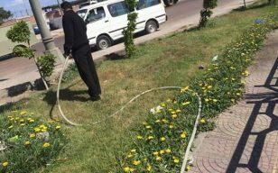 تنفيذا لتعليمات رئيس  حي العجمي بالأسكندرية  إدارة الحدائق تستعد لموسم الصيف...
