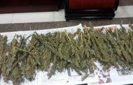ضبط عاطل وبحوزته ( 3 ) كيلو جرام من نبات البانجو المخدر بمركز فاقوس - شرقية