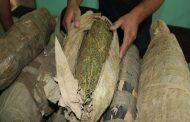 ضبط عاطل وبحوزته عدد ( 15 ) لفافه من نبات البانجو المخدر بناحية ترعة الكساره فاقوس-شرقية