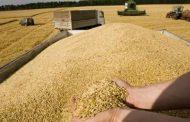 صوامع وشون قنا تستقبل 94 الف طن من القمح