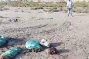 عاجل..العثور على بقايا حمير بشواطئ رأس البر في دمياط والتفاصيل .......