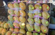 309 مليون دولار صادرات الإسماعيلية من الخضر والفاكهة والمحاصيل الحقلية خلال الستة أشهر الماضية .